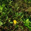 9月23日の花