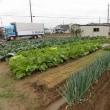 家庭菜園、雨の中