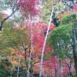 鈴虫寺の紅葉