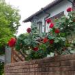 薔薇がいっぱい咲きました!