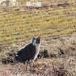 あんたどこの猫?