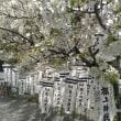 桜咲く季節?