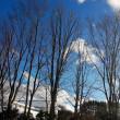 青空樹木。