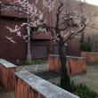 春はもうすぐそこ