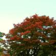 西尾城址の紅葉