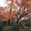 等々力渓谷の秋