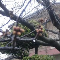 3・16朝、雨が春を呼ぶ!