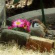 庭のスズメたち