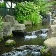 雨を待っている・・・見沼代親水公園