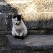 宏村と西逓村の猫たんたち