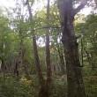 白神山地で森林浴