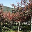柿園から観た筑波山紅葉