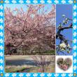 勝浦のビッグひな祭りと月ケ谷温泉