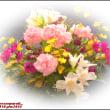 image2414 迎え花たち