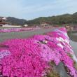 絶景の芝桜 見頃~ 2018 4/16 東広島 下三永 福本ICすぐ
