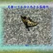 『 足掻いても力は尽きる落揚羽 』余命交心qq3010