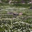 恵山高原を彩る花たち
