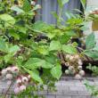 梅雨の庭とランチ