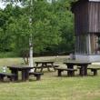 野幌森林公園にて夏を松の実と