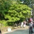 初夏の深大寺