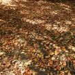 桂の落ち葉 les feuilles mortes