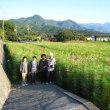 見奈良のコスモス園