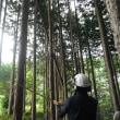 林業用語②と木の値段