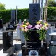 澤井先生墓参のお知らせ。埼玉の奥座敷:田舎道散歩