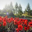 赤い花園。
