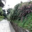 北鎌倉の「長寿寺」
