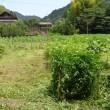 雑草とり 2