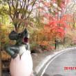 紅葉狩りに行っておりました(^_^)