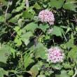 秋の明日香路  その④  見掛けた花たち