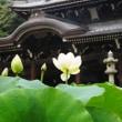 蓮の花咲く「三室戸寺」。福徳・金運・勝運などにご利益がある牛やウサギとの出会いも