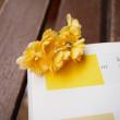 木香バラ こだわりの黄色
