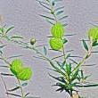 天竺川の自然・14回目・7月前半・2017.7.1~7.15