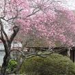 夏日?の千里山 4月20日(金)晴れ