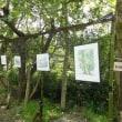 樹林のギャラリー