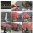成田山公園紅葉01。