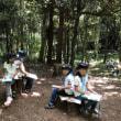 夏のスカウトの森