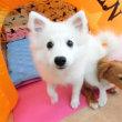 パピーたちすくすく成長中〜♪  犬のしつけ教室@アロハドギー