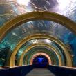 浅虫水族館・愉快な魚たち✌('ω'✌ )