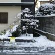 朝一度に雪かきです。