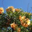 『晩夏の花』 凌霄花