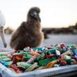 南大西洋の島嶼の中でプラゴミで最も汚れている  東フォークランド
