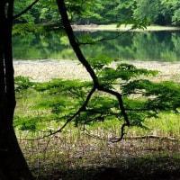 2663 緑の季節