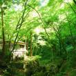【週末イベントのご案内】明治の森箕面国定公園 クイズで巡る!箕面公園お手軽ハイキング