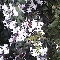 花のうたげ
