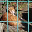フェンス越しの猫達