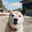 飯館村 取り残された犬猫たち(フォトグラファー 上村雄高)